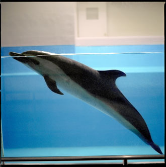 Taiji Whale Museum Dolphin
