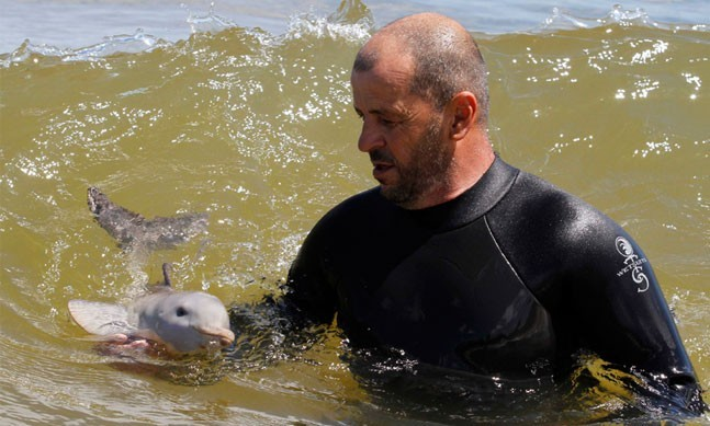 """This newborn La Plata dolphin was found on the beach in Uruguay entangled in a fishing net, along with a baby penguin. The baby dolphin still had her umbilical cord attached, which meant she had only just been born. She was rescued by a local marine rescue centre, and is being nursed back to health. Here, Richard Tesore, the head of the centre, feeds the dolphin, who was nicknamed """"Nipper"""", milk in a bottle."""