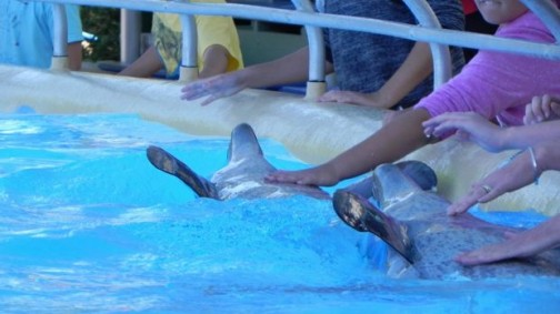 Dolphin-shows-belong-in-the-history-books_1