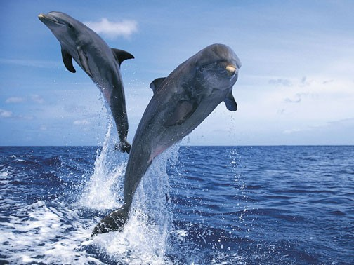India recognises dolphins as